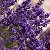 Lavender-07132014-121854(f).jpg