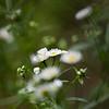 Wildflower-07132014-121115(f).jpg